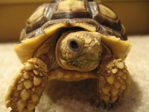 Keeping Tortoises As Pets at MadelineDyer.com